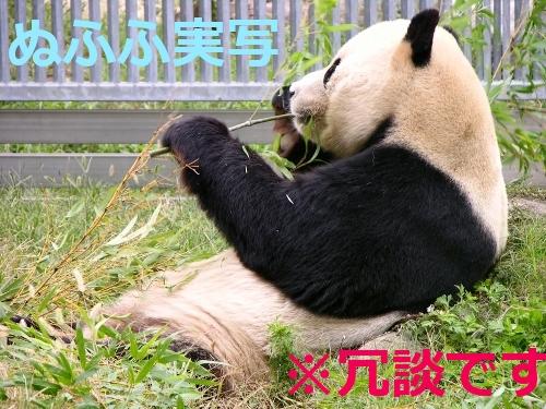 ぬふふ実写 とみせかけてただのパンダ