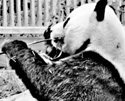 panda-20120718