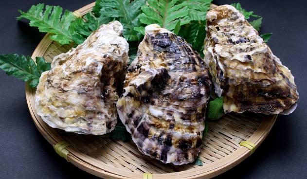 牡蠣の貝部分を撮影した写真
