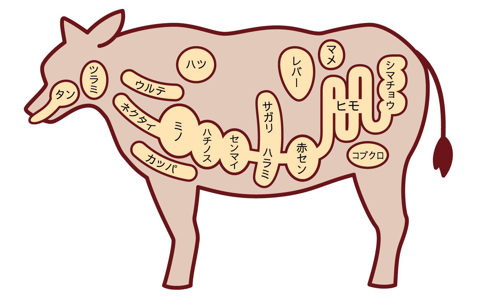 牛のホルモン部位解説