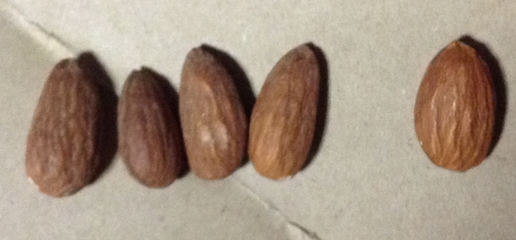 アーモンドの大きさ比較 左4粒が100円ローソン 右の1粒が通販で購入したアーモンド。