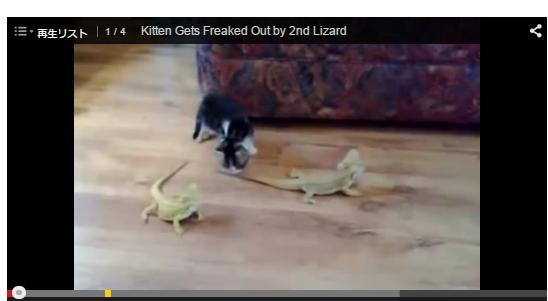 猫とカメレオンの動画キャプチャー