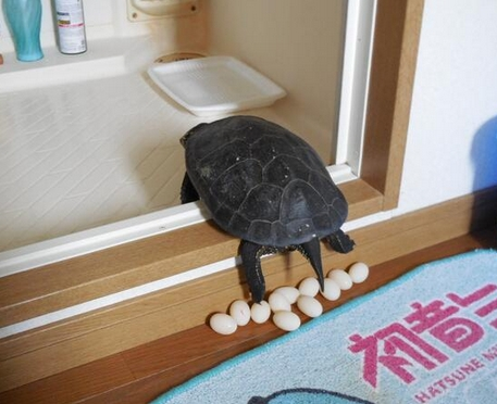 Laying eggs of a tortoise Bathroom