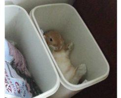 ゴミ箱にウサギが