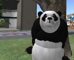panda_namba_001