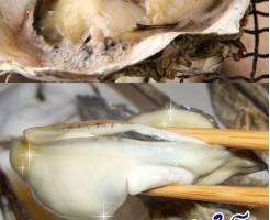 カキ(漢字:牡蠣 英語:Oyster)について