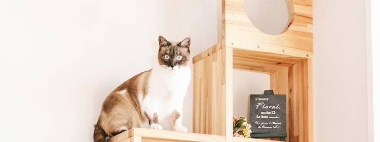 家の中で棚に上る猫