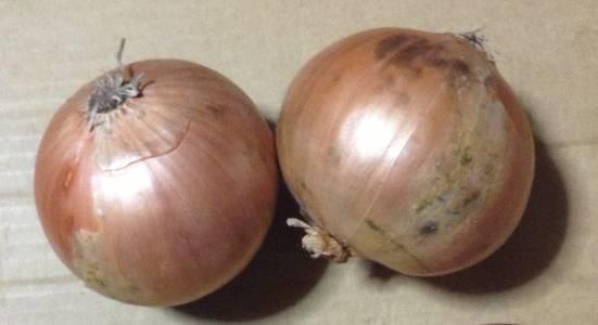 玉葱2個の写真