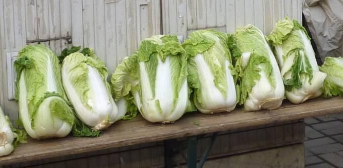 海外で売られている白菜