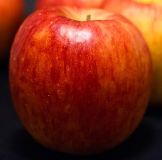 林檎の写真