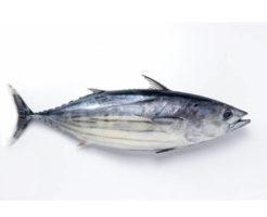 カツオの栄養成分とカロリー・糖質・旬など|魚介類