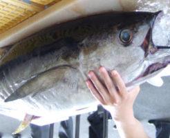 マグロの栄養成分とカロリー・糖質・旬など|魚介類