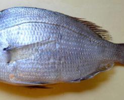 タイ(鯛)の写真