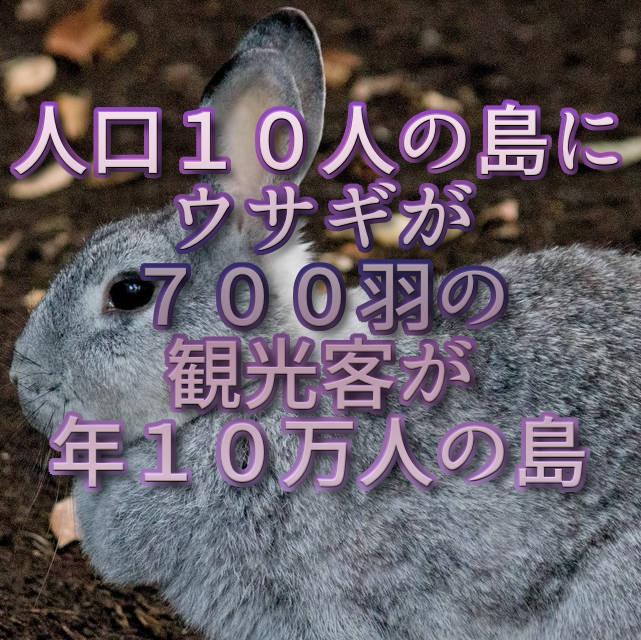文字『人口10人の島にウサギが700羽の観光客が年10万人の島』