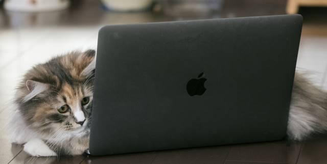 PCを覗く猫
