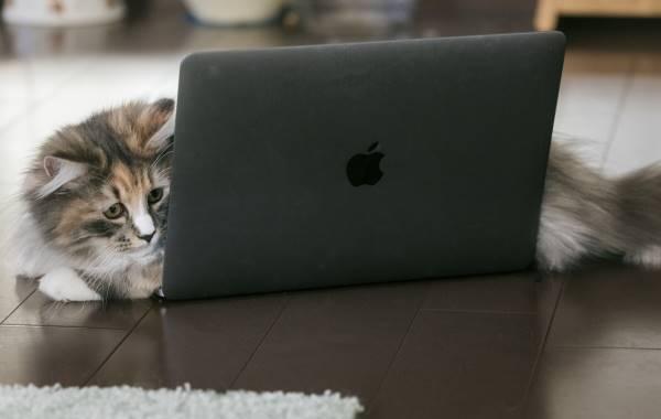 PCをのぞき込む猫