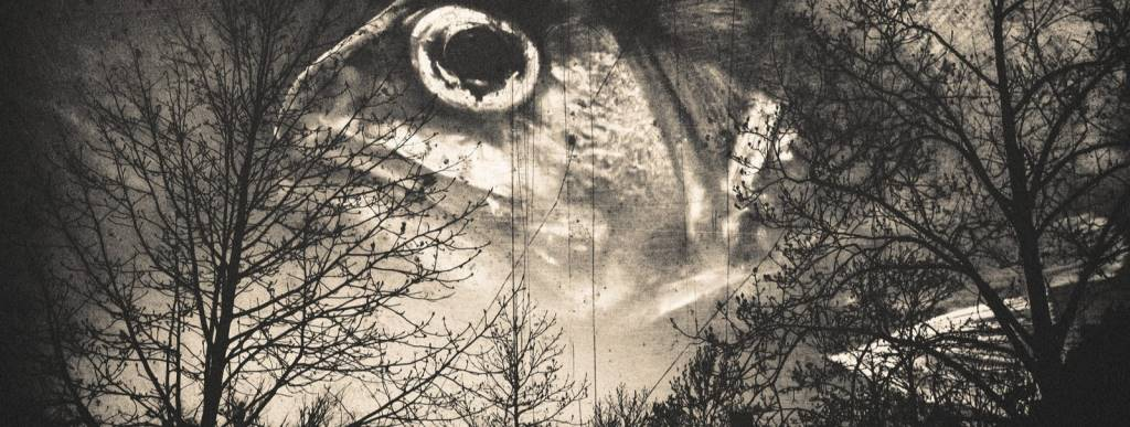 森と魚の目