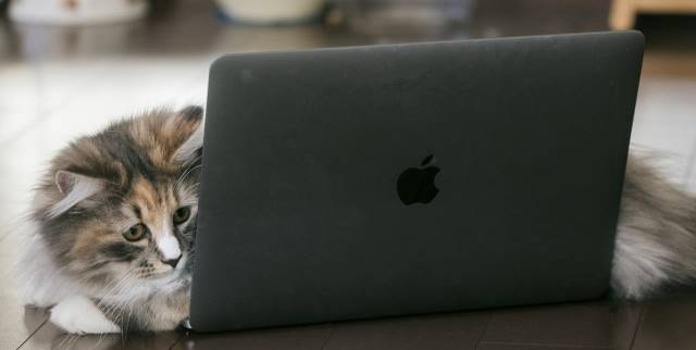 PCを閲覧する猫