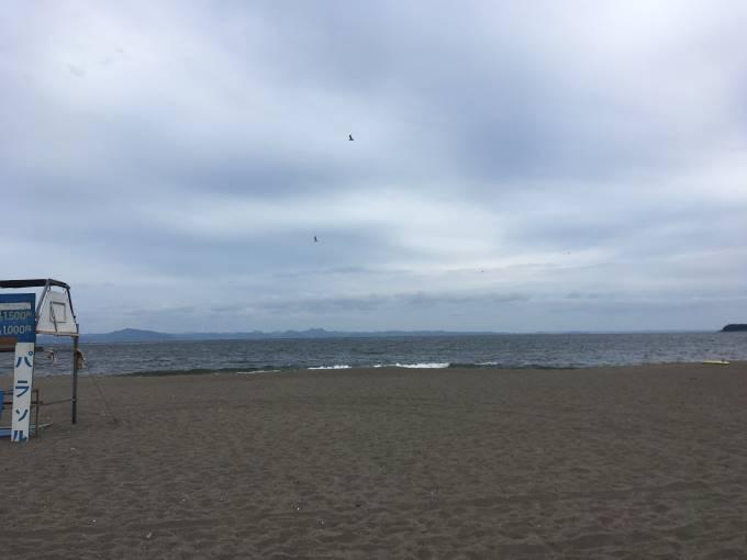 海に鳥が飛んでる