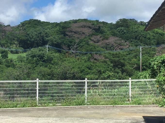 火葬場近くの木々