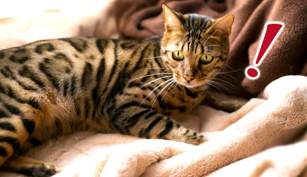 猫にビックリマーク