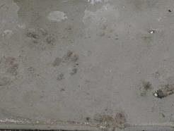 コンクリートが固まる前のセメントの色